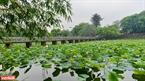 Hồ Tịnh Tâm, một trong 20 thắng cảnh nổi tiếng của đất kinh kì và cũng là nơi trồng sen nổi tiếng của Huế xưa và nay. Ảnh: Nguyễn Đức Tuấn