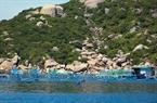 Những mỏm đá, ngọn đồi như bức bình phong che chắn cho mặt nước vịnh Cam Ranh là điều kiện thuận lợi cho nghề nuôi tôm hùm.