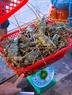 Hiện giá tôm hùm bông thương phẩm loại 1 (cỡ từ 0,8kg đến trên 1 kg/con) dao động trên dưới 2 triệu đồng/kg và tôm hùm xanh gần 1 triệu đồng/kg.