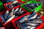 Những mẻ cá tươi vừa được bốc dỡ từ khoang tàu lên cho thương lái lựa chọn.