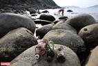 Đa số rác nằm dưới đáy biển đều là chai lọ...