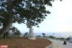 Tượng Phật dưới gốc cây bồ đề cổ thụ trong khuôn viên chùa Linh Ứng.
