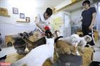 Hiện tại Bình đã nghỉ việc và tập trung hết sức để có thể để cứu các chú mèo.