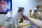 Phần lớn những chú mèo ở Ngao's Home còn nhiều di chứng, không thể phục hồi hoàn toàn nhưng chúng được chăm sóc cẩn thận, chu đáo tại mái ấm này.