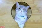 Nguyễn Thanh Bình tự tay đóng những ngôi nhà xinh xắn cho các chú mèo tại Ngao's Home.