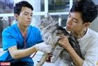 Những chú mèo tại Ngao's Home thường xuyên được chăm sóc y tế bởi phần lớn không thể phục hồi hoàn toàn do từng bị thương rất nặng.