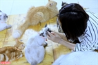 Mỗi chú mèo được Bình đặt cho một cái tên rất dễ thương tùy thuộc vào hoàn cảnh lúc nhận nuôi hoặc tình cách riêng của chúng.