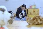 Phần lớn những khách hàng tại Ngao's Home đều yêu quý và có tình cảm đặc biệt với những chú mèo.