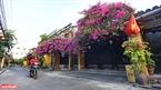 Peaceful houses under bougainvillea plants. Photo: Thanh Hoa