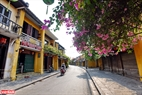 Beautiful flowers are blooming around the town. Photo: Thanh Hoa