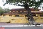 Los viejos árboles de  almendrón son bellos al lado de antigua obra arquitectura en Con Dao. Foto: Thong Hai/VNP