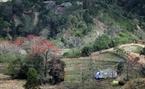 Hoa gạo như những đốm lửa, thắp sáng vùng đất cao nguyên đá Hà Giang.