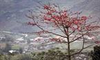 Vẻ đẹp của hoa gạo Hà Giang đỏ rực khiến bất cứ vị khách nào chiêm ngưỡng cũng phải ngẩn ngơ.
