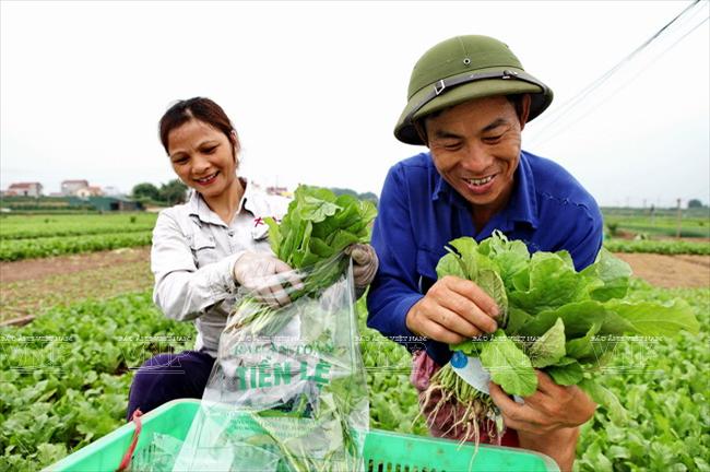 Kết quả hình ảnh cho Tien Le Vegetable village