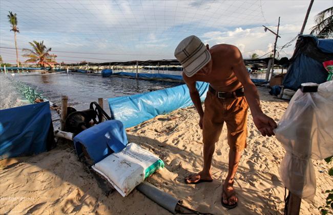 Cr a de camarones en la arena en quang nam revista vietnam for Criadero de camaron en estanques circulares