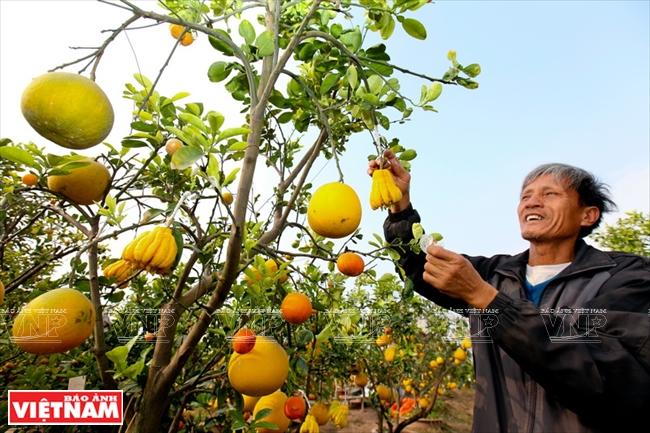ベトナムのテトの特別な産物 - ...