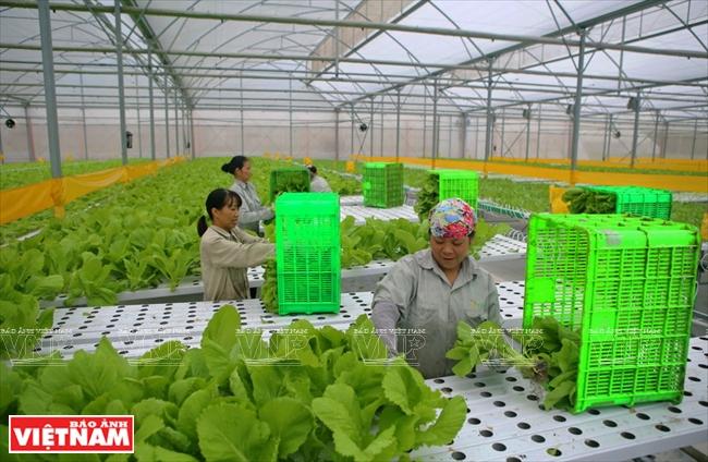 Hi-tech Farming Means Better Vietnamese Agriculture - Vietnam Pictorial