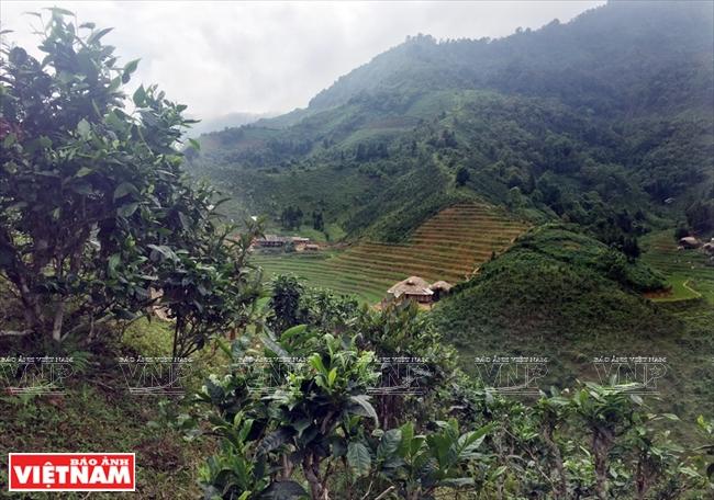 Ecolink – A Taste of Vietnam Ethnic Culture