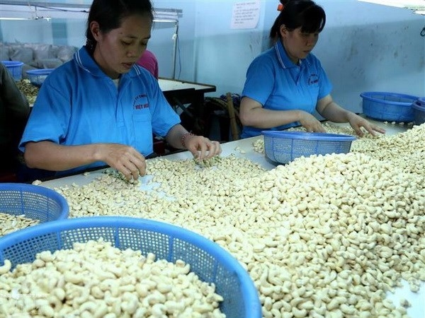https://imagevietnam.vnanet.vn/Upload/2019/3/4/04032019145745307vietnams_cashew_production.jpg