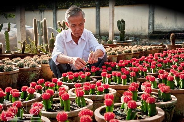 "cultivo de ""flores de la arena"" - revista vietnam"