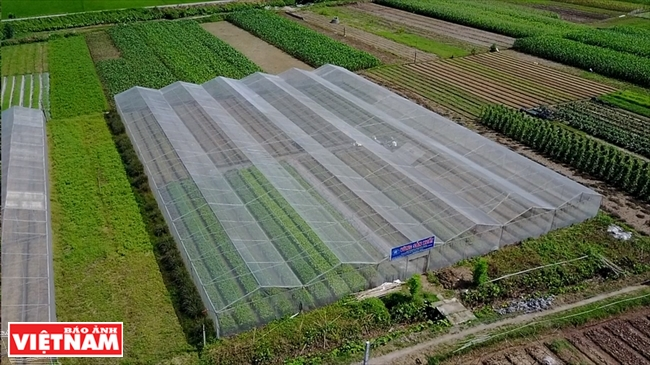 Hanoi Cooperates with Hung Yen to Provide Clean Agricultural Products