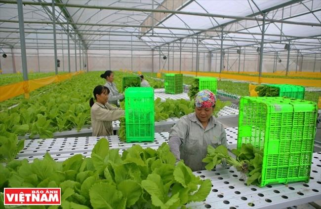 高科技打开越南农业潜力的钥匙