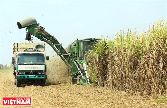 TTCS the leading producer of refined sugar