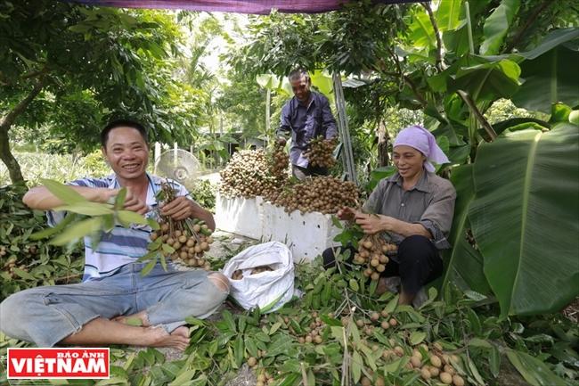Frutas dulces de los nuevos cultivos