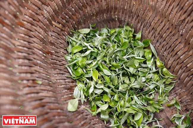 Чай Шантует - деликатес облачного рая Тасуа