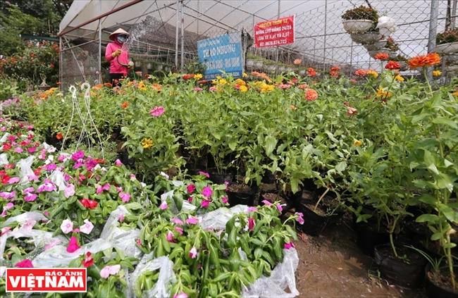 Sức sống mới ở làng hoa Xuân Quan