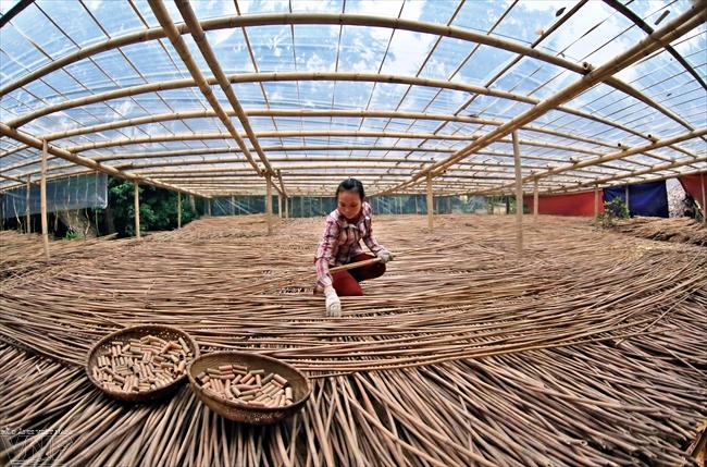 Hon Mu a nature inspired startup