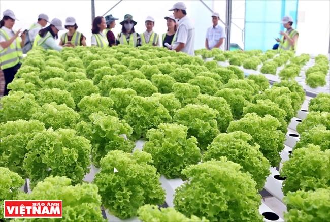 Delco Farm 高科技农业模式