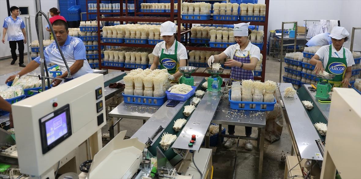 日本の技術で茸を栽培する