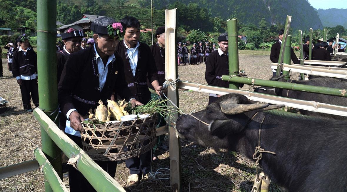 Ceremonia de adoración al búfalo del pueblo lu