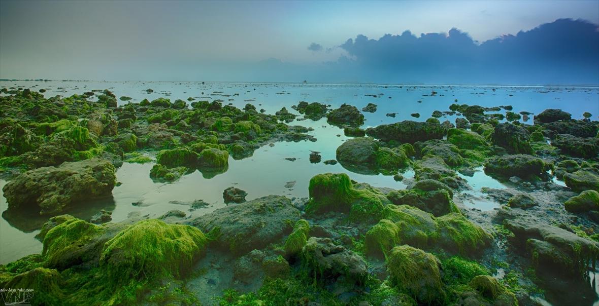 Campo de algas marinas en Ninh Thuan